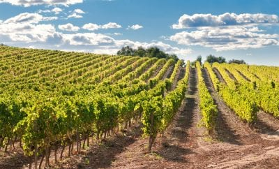 Wines of Hvar Island